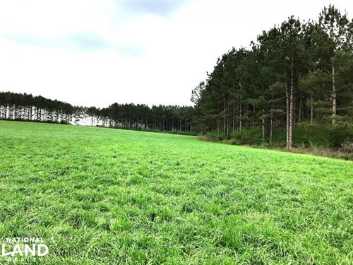 Large Cattle Farm With Timber : Poplarville : Pearl River County : Mississippi