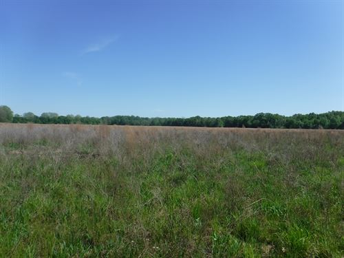 75 Acres Of Farmland In Hinds Co Ms : Bolton : Hinds County : Mississippi
