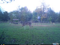 Highway 96 Hunting & Recreation : Irwintom : Wilkinson County : Georgia