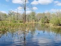 Kingston Ranch High Fence Hunting : Clayton : Concordia Parish : Louisiana