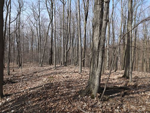 Spaciously Wooded With Frontage : Camillus : Onondaga County : New York
