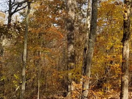 Hawkins Hideaway : Roanoke : Randolph County : Alabama