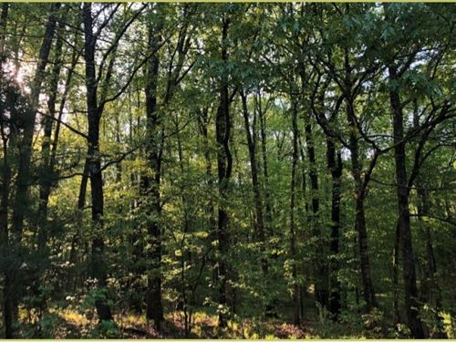 88 Acres In Lafayette County In Com : Como : Lafayette County : Mississippi