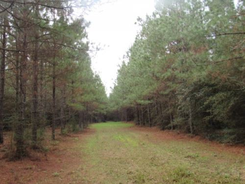 Hunting & Timber Investment : Monticello : Lawrence County : Mississippi
