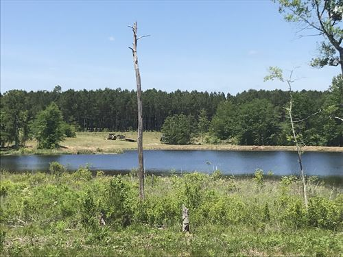 Sardis Pond : Sardis : Burke County : Georgia