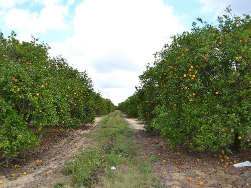 Babson Park Scenic Highway Groves : Lake Wales : Polk County : Florida