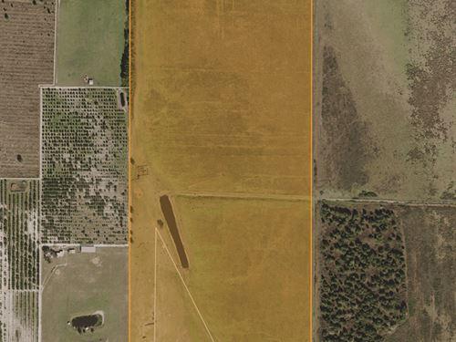 Alturas Shreck Road Pasture : Bartow : Polk County : Florida