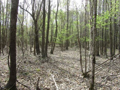 19.44 Acres In Montgomery County : French Camp : Montgomery County : Mississippi