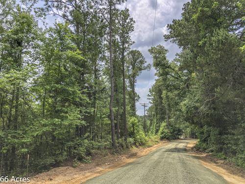 66 Acres Tyler County Getaways : Colmesneil : Tyler County : Texas