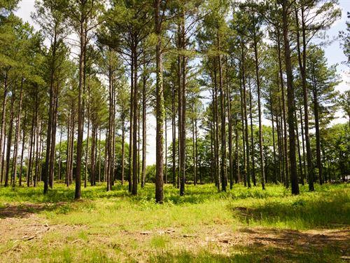 Turnkey Timber Investment : Good Hope : Walton County : Georgia