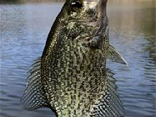 Beautiful Land With Pond : Loganville : Walton County : Georgia