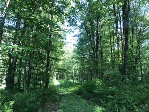 Wild Apples And Mature Timber : Redfield : Oswego County : New York