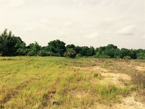 Owner Financing 105 Acres Hilltop : Brooksville : Hernando County : Florida