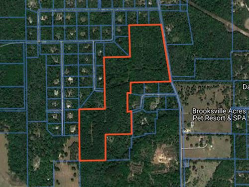 Owner Financing 81 Acres : Brooksville : Hernando County : Florida