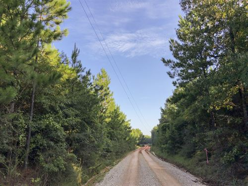 86 Acres Tevis : Livingston : Polk County : Texas