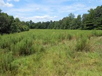 Beautiful Acreage In Country : Westport : Carroll County : Tennessee