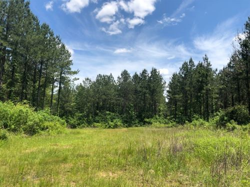 101 Acres In Rankin County In Pelah : Pelahatchie : Rankin County : Mississippi