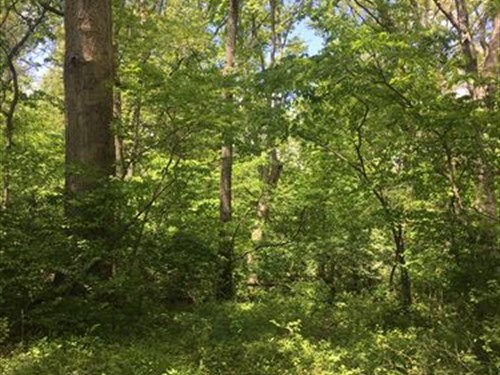 Illinois Hunting/Building Property : Taylorville : Christian County : Illinois