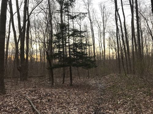New Guilford Rd, 115 Acres : Walhonding : Knox County : Ohio
