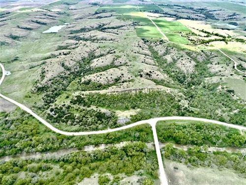 140 Acres of Excellent Hunting : Alton : Osborne County : Kansas