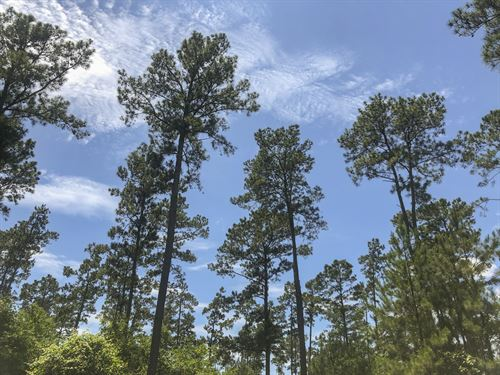 18 Acres Fm 1696 : Huntsville : Walker County : Texas