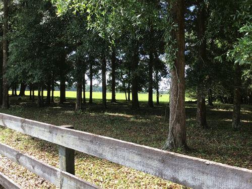 High Springs, Fl Ranch Land : High Springs : Alachua County : Florida