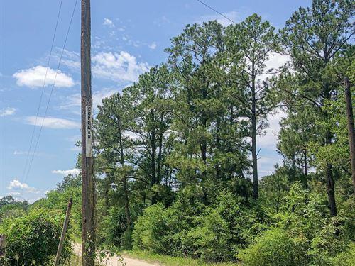 323 Acres Copeland Road Tract 5306 : Huntsville : Walker County : Texas
