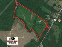 83 Acres of Hunting And Recreation : Chase City : Lunenburg County : Virginia