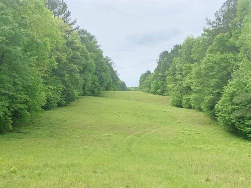 230.38 Acres Timber/Hunting Land Fo : Meadville : Franklin County : Mississippi