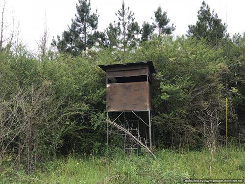 Prime Hunting : Meadville : Franklin County : Mississippi