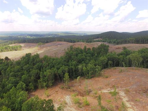 118 Acres With Creeks & Cabin : Ashland : Clay County : Alabama