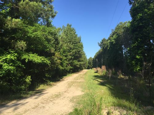 Ponley Lane East Tract : Cottageville : Colleton County : South Carolina