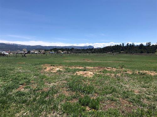 Irrigated Land Los Ojos Close to : Los Ojos : Rio Arriba County : New Mexico