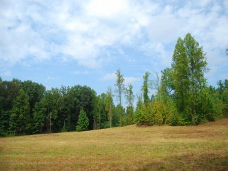 13 Acre Tract Near Cross Anchor : Cross Anchor : Spartanburg County : South Carolina