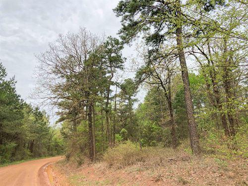 213 Acres Cr 2864 Tract 1017 : Hughes Springs : Cass County : Texas
