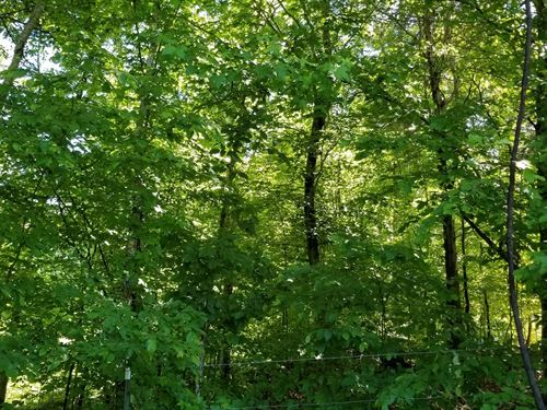 Vacant Land in Perry County, TN : Clifton : Perry County : Tennessee