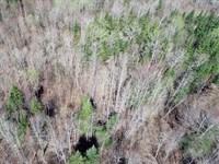 Scales Brook Forest : Lunenburg : Essex County : Vermont