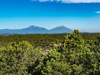 Wooded Mountain Top Land Near Blm : Trinidad : Las Animas County : Colorado