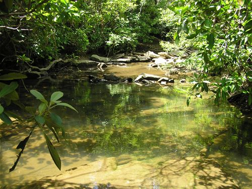 Creek, Mountain Land, Views : Dunlap : Sequatchie County : Tennessee
