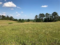 Large Land Tract In Cochran : Cochran : Bleckley County : Georgia