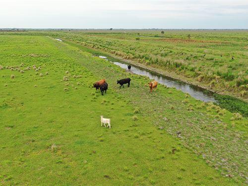 Sunset Trails Farm : Lorida : Highlands County : Florida