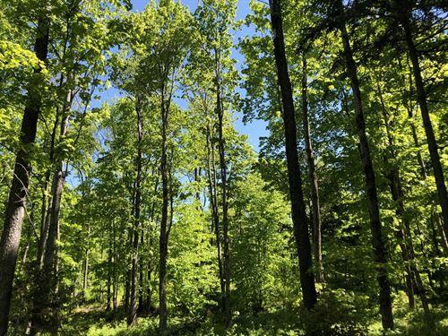 Lewis Woods : West Leyden : Lewis County : New York