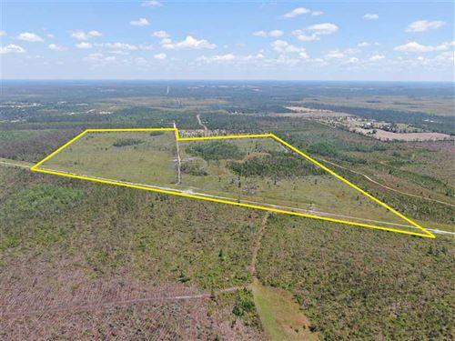 156 Acres Big Mac Rd : Clarksville : Calhoun County : Florida