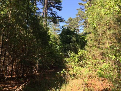 Mature Pine Timber Land Arkansas : Chidester : Ouachita County : Arkansas