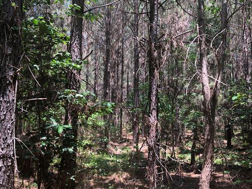 Planted Pine, Creek Land Rosston : Rosston : Nevada County : Arkansas