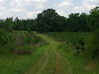 Pessell Creek Ridge Tract : Plains : Sumter County : Georgia