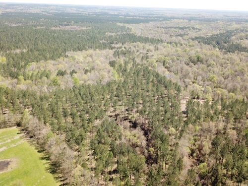 770 Ac, Cahaba River Tract : Sprott : Perry County : Alabama