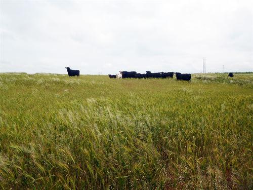Custer County Land Auction : Arapaho : Custer County : Oklahoma