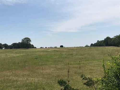 Cattle Pasture & More Pasture : De Kalb : Bowie County : Texas