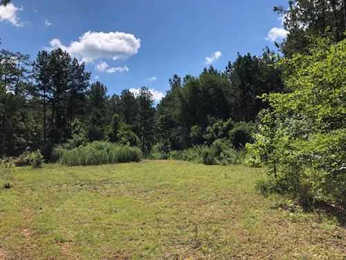 Big Creek Big Timber : Forsyth : Monroe County : Georgia